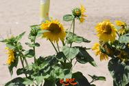 Sunday Afternoon at La Mer 07-07-19 Part 1/2