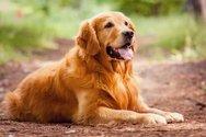 Πάτρα - Κρατούσε το σκύλο της στην ταράτσα του σπιτιού, κάτω από κακές συνθήκες