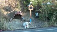 Δυτική Ελλάδα: Σκύλος ζει πλάι στο εικόνισμα του αφεντικού του που σκοτώθηκε (video)