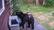 Σκύλος 'τα έβαλε' με αρκούδα που μπήκε στον κήπο σπιτιού (video)