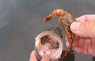 Ψαράς κερνάει... μεζεδάκι σε ψάρι πριν το απελευθερώσει (video)