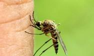 Κουνούπια: Φυσικά υλικά που έχετε ήδη στο σπίτι για να τα κρατήσετε μακριά