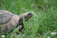 Θεσπρωτία: Πέταξαν ζωντανές χελώνες σε κάδο σκουπιδιών