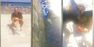 Πέταξαν σκύλο στη θάλασσα στο Ηράκλειο Κρήτης (video)