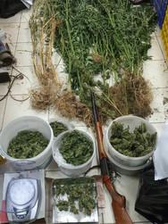 Δυτική Ελλάδα: Συνελήφθη 55χρονος καλλιεργητής ναρκωτικών σε χωριό της Ηλείας