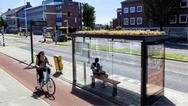 Ολλανδία: Καλύπτουν με λουλούδια τις στάσεις λεωφορείων για να βοηθήσουν... τις μέλισσες