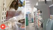 Viral βίντεο με ποντίκια που γέμισαν τα ράφια σε ιαπωνικό σούπερ μάρκετ