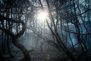 Τεράστια οικολογική καταστροφή στην Εύβοια - Στάχτη το δάσος Natura