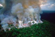 Ο Αμαζόνιος εκπέμπει SOS - Τεράστια περιβαλλοντική καταστροφή (φωτο+video)
