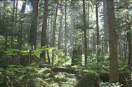 Ο Τραμπ ανάβει πράσινο φως για αποψίλωση δασών στην Αλάσκα