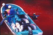 Ιαπωνία: Δολοφονούν ξανά εκατοντάδες δελφίνια