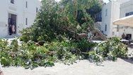Πάρος: Δέντρο έπεσε στην είσοδο της Εκατονταπυλιανής και πλάκωσε άνθρωπο!