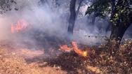 Υψηλός κίνδυνος πυρκαγιάς την Παρασκευή σε όλη τη Δυτική Ελλάδα