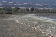 Θεσσαλονίκη: Νεκροταφείο ψαριών η λίμνη Κορώνεια (φωτο)