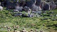 Υπουργείο Αγροτικής Ανάπτυξης: Στόχος η πλήρης αξιοποίηση των κατάλληλων εκτάσεων για βοσκότοπους