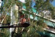 Πάτρα: Ετοιμάζονται για το κλάδεμα των δέντρων - Η αρχή από τα Ψηλαλώνια