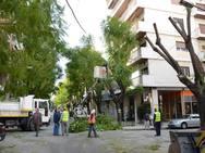 Πάτρα: O Δήμος προχωρά σε εργασίες κλαδέματος