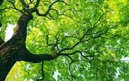 Με εξαφάνιση απειλείται το 40% των δένδρων στην Ευρώπη