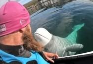 Φάλαινα αρπάζει κάμερα από δύτη (video)