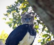 Ο αετός που μοιάζει με άνθρωπο, ντυμένο με στολή πτηνού (φωτο)
