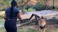 Γυναίκα μπήκε στο κλουβί του λιονταριού (video)
