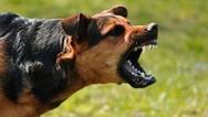 Δυτική Ελλάδα: Σκύλος δάγκωσε 17χρονο στο πόδι