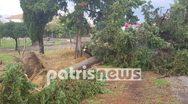 Πτώσεις δέντρων προκάλεσε η κακοκαιρία στην Ηλεία (φωτο)