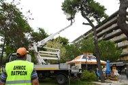 Πάτρα: Συνεχίζεται το κλάδεμα των δέντρων στα Ψηλαλώνια (φωτο)