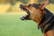 Δυτική Ελλάδα: Aδέσποτος σκύλος δάγκωσε ηλικιωμένο