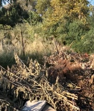 Πάτρα - Το 'προστατευόμενο' Πλατανόδασος είναι μάλλον απροστάτευτο! (φωτο)