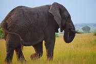 Περισσότεροι από 50 ελέφαντες θύματα της ξηρασίας στη Ζιμπάμπουε
