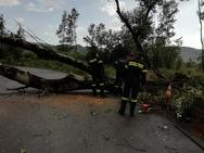 Δυτική Ελλάδα: Έπεσαν δέντρα στην Πατρών - Πύργου λόγω των ισχυρών ανέμων (φωτο)