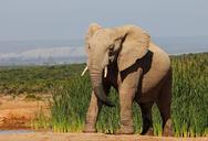 Ελέφαντας σκότωσε 59χρονο τουρίστα στη Ναμίμπια