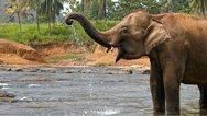 Iνδία: Ο ελέφαντας σκότωσε πέντε χωρικούς