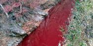 Έσφαξαν χιλιάδες ζώα στη Σεούλ