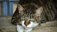 Μυτιλήνη: Ξεκοίλιασαν γάτα για να δουν αν έχει μωρά (φωτο)