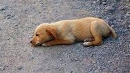 Δυτική Αχαΐα: Έριξε φόλα σε τρεις σκύλους