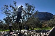 'Φωνάζουν' οι αγρότες στην Αχαΐα - Οι έμποροι ρίχνουν την τιμή του λαδιού και 'σκοτώνουν' την παραγωγή