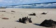 Εκατοντάδες πουλιά ξεβράστηκαν νεκρά σε παραλίες του Σίδνεϊ