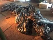 Πάτρα: Καταστράφηκαν μεγάλες ποσότητες ναρκωτικών ουσιών από την αστυνομία