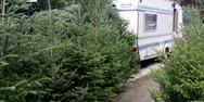 Από 30 Νοεμβρίου η πώληση φρέσκων Χριστουγεννιάτικων δέντρων