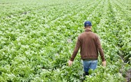 Δυτική Ελλάδα - Διπλασιάστηκαν οι αιτήσεις για το επάγγελμα του αγρότη στα χρόνια της κρίσης