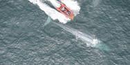 Επιστήμονες άκουσαν την καρδιά μιας γαλάζιας φάλαινας (video)