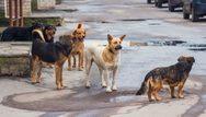 Πάτρα - 16χρονη δέχθηκε επίθεση από τρεις σκύλους