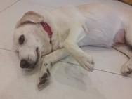 Πάτρα: Η σκυλίτσα που βρέθηκε πυροβολημένη έγινε καλά και ψάχνει οικογένεια