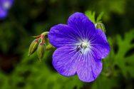 Το 40% των φυτών της Γης είναι πολύ σπάνια και ευάλωτα στην κλιματική αλλαγή