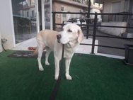 Πάτρα: Υιοθετήθηκε η σκυλίτσα που είχαν πυροβολήσει στην περιοχή του Καραμανδανείου