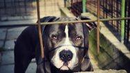Βόλος: Σκύλος δάγκωσε ταχυδρόμο και τον έστειλε στο νοσοκομείο
