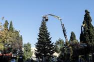 Την Τρίτη ανάβει το χριστουγεννιάτικο δέντρο στην πλατεία Συντάγματος