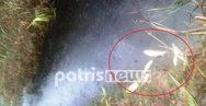 Εκατοντάδες νεκρά ψάρια στις όχθες του Πηνείου
